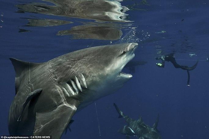 Mỹ: Cá quái vật hiếm có bất ngờ trôi dạt vào bờ - Ảnh 2.