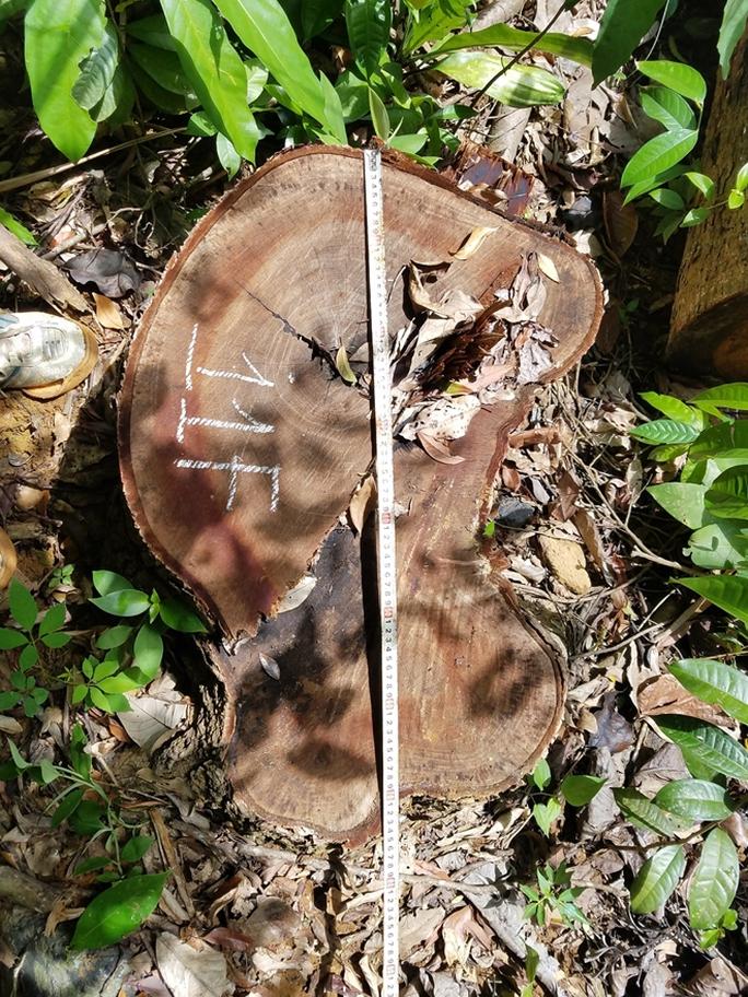Để lâm tặc ồ ạt mở đường, phá rừng, cả lãnh đạo hạt kiểm lâm, ban quản lý rừng bị khởi tố - Ảnh 3.