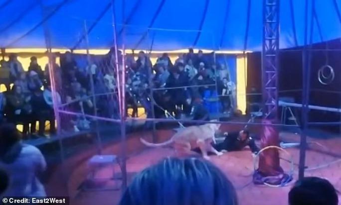 Nghệ sĩ xiếc thú bị sư tử tấn công ngay trên sân khấu - Ảnh 2.