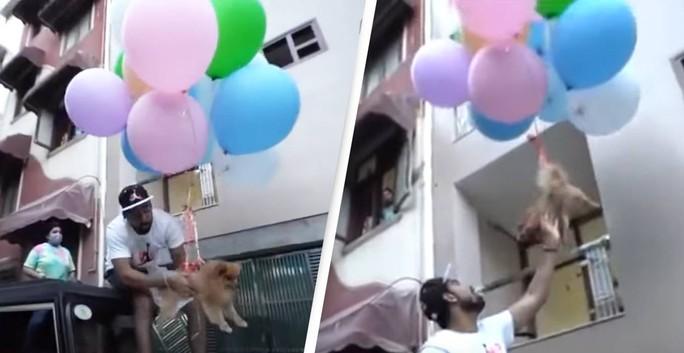 YouTuber nổi tiếng bị bắt sau khi buộc chó cưng vào bóng bay - Ảnh 3.