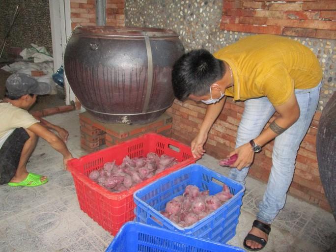 Nhiều nơi hỗ trợ tiêu thụ khoai lang tím Nhật giá 5.000 – 9.000 đồng/kg - Ảnh 3.