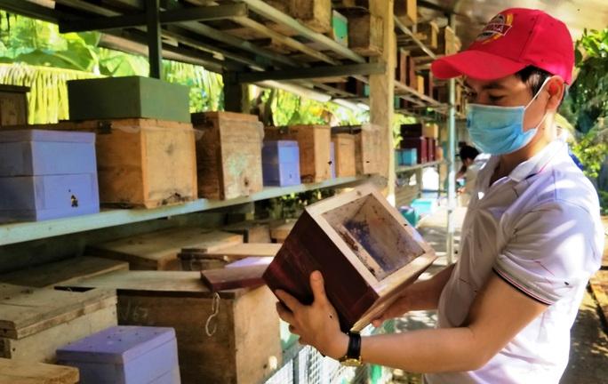Nuôi ong dú, thu hàng trăm triệu đồng mỗi năm - Ảnh 1.