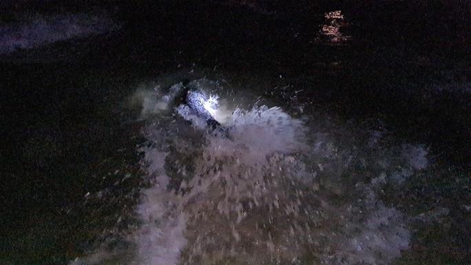 Hải cẩu quý hiếm bất ngờ xuất hiện ở biển Quảng Nam - Ảnh 7.