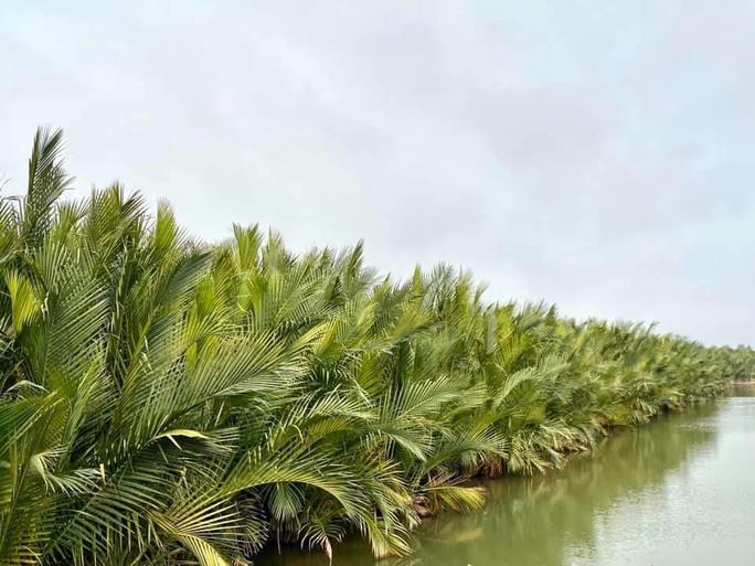 Dựng bê-tông xanh trên phá Tam Giang - Ảnh 1.