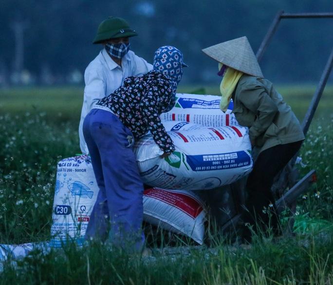 CLIP: Nắng đỉnh điểm, nông dân Hà Nội ra đồng gặt lúa vào ban đêm - Ảnh 12.