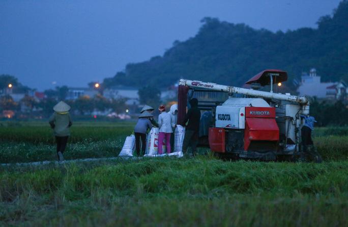 CLIP: Nắng đỉnh điểm, nông dân Hà Nội ra đồng gặt lúa vào ban đêm - Ảnh 6.