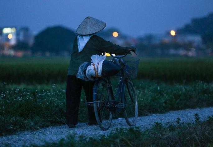 CLIP: Nắng đỉnh điểm, nông dân Hà Nội ra đồng gặt lúa vào ban đêm - Ảnh 14.