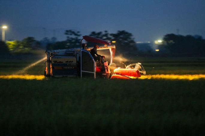 CLIP: Nắng đỉnh điểm, nông dân Hà Nội ra đồng gặt lúa vào ban đêm - Ảnh 2.
