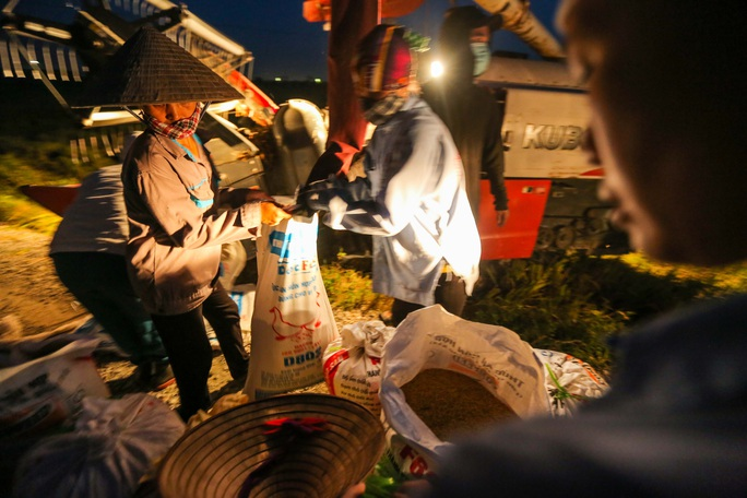 CLIP: Nắng đỉnh điểm, nông dân Hà Nội ra đồng gặt lúa vào ban đêm - Ảnh 10.