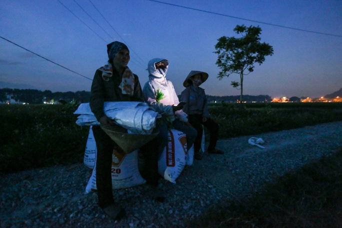 CLIP: Nắng đỉnh điểm, nông dân Hà Nội ra đồng gặt lúa vào ban đêm - Ảnh 11.