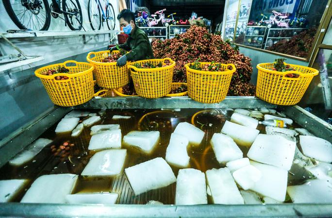 CLIP: Xuyên đêm đóng gói vải đưa sang Trung Quốc tiêu thụ - Ảnh 8.