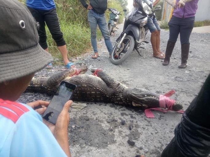 Có khả năng một số người đã thả cá sấu ra ngoài tự nhiên - Ảnh 2.
