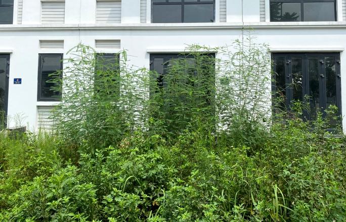 Biệt thự hàng chục tỉ đồng bỏ hoang nhiều năm ở Hà Nội - Ảnh 12.