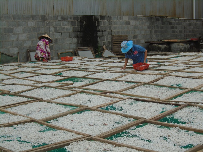 Ngư dân Bình Thuận trúng mùa cá cơm - Ảnh 9.