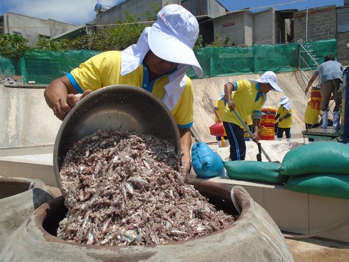 Ngư dân Bình Thuận trúng mùa cá cơm - Ảnh 8.