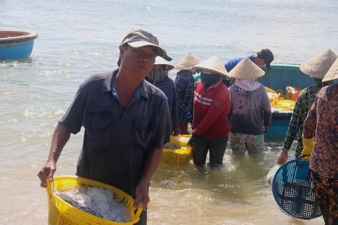Ngư dân Bình Thuận trúng mùa cá cơm - Ảnh 2.