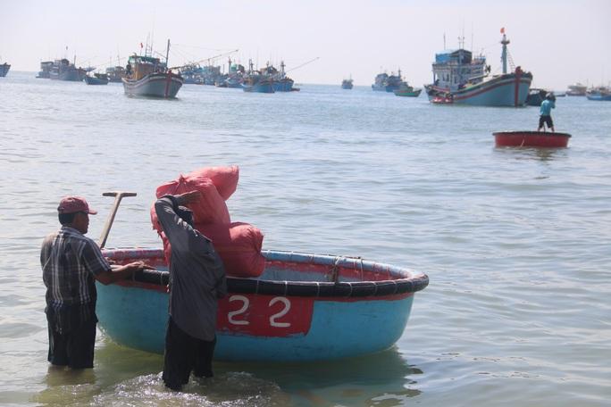 Ngư dân Bình Thuận trúng mùa cá cơm - Ảnh 10.