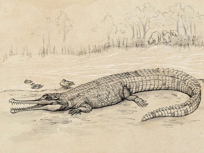 Đào được trùm cá sấu 5 triệu tuổi, to hơn nhiều loài khủng long - Ảnh 1.