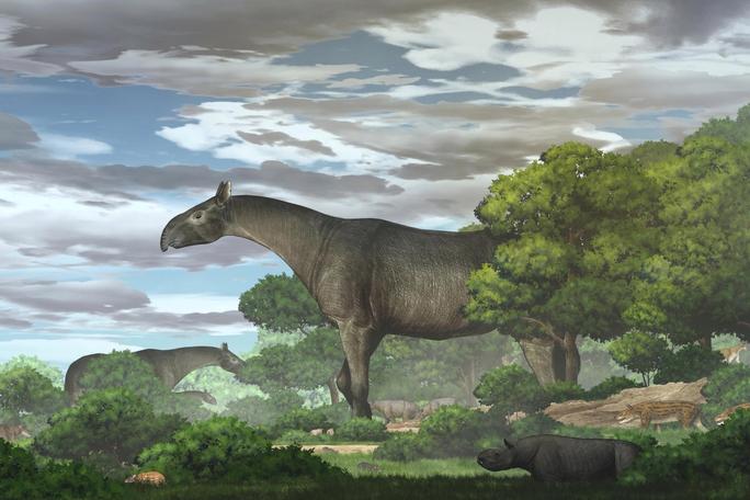 Kinh hãi tê giác quái thú 26,5 triệu tuổi giống khủng long, gấp 4 lần voi - Ảnh 1.