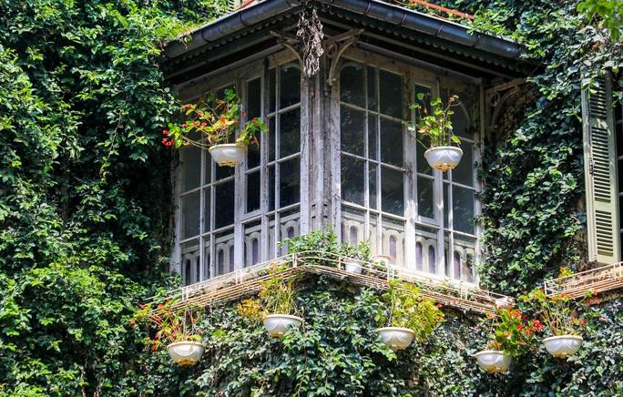 Cận cảnh ngôi biệt thự phủ toàn cây xanh giúp chủ nhà tránh nắng nóng - Ảnh 2.