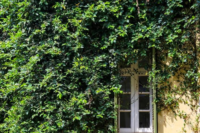 Cận cảnh ngôi biệt thự phủ toàn cây xanh giúp chủ nhà tránh nắng nóng - Ảnh 9.