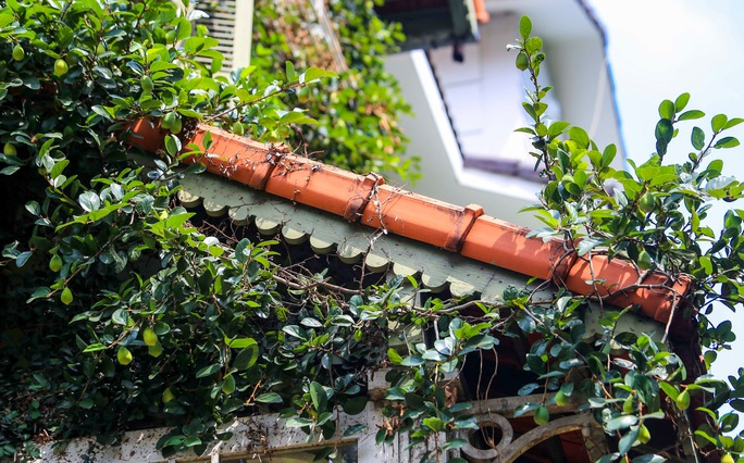 Cận cảnh ngôi biệt thự phủ toàn cây xanh giúp chủ nhà tránh nắng nóng - Ảnh 6.