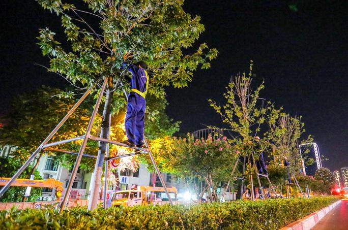 CLIP: Hà Nội di dời hàng cây phong lá đỏ trong đêm - Ảnh 7.
