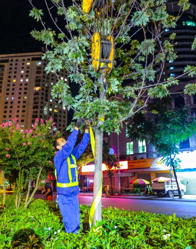 CLIP: Hà Nội di dời hàng cây phong lá đỏ trong đêm - Ảnh 10.