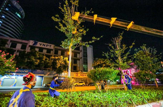 CLIP: Hà Nội di dời hàng cây phong lá đỏ trong đêm - Ảnh 12.