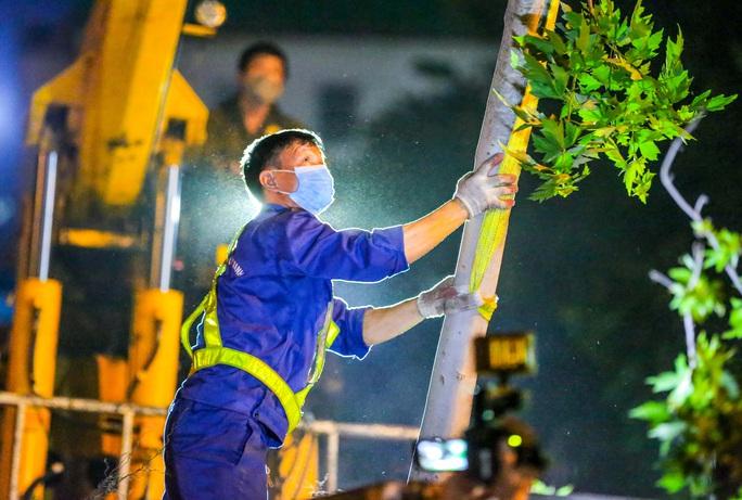 CLIP: Hà Nội di dời hàng cây phong lá đỏ trong đêm - Ảnh 3.