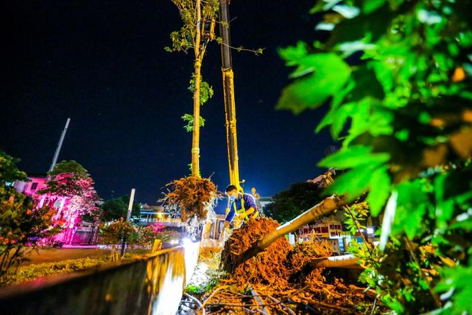 CLIP: Hà Nội di dời hàng cây phong lá đỏ trong đêm - Ảnh 2.
