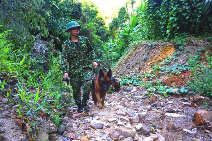 CLIP: Nổ mìn đánh sập 75 hầm vàng trong Vườn Quốc gia Sông Thanh - Ảnh 2.