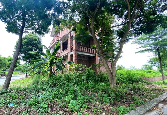 CLIP: Hàng loạt biệt thự bỏ hoang, khu đô thị ở Hà Nội thành nơi chăn thả bò - Ảnh 7.