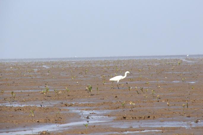 Trải nghiệm thú vị ở rừng ngập mặn lớn nhất Việt Nam - Ảnh 10.