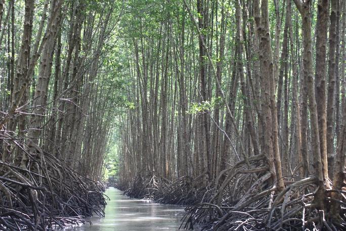 Trải nghiệm thú vị ở rừng ngập mặn lớn nhất Việt Nam - Ảnh 4.