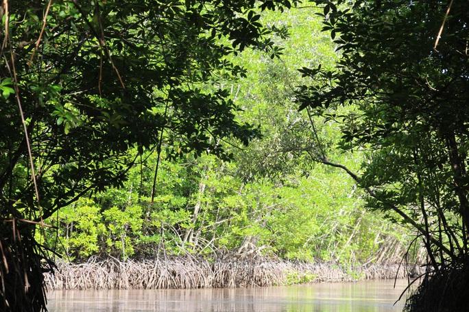 Trải nghiệm thú vị ở rừng ngập mặn lớn nhất Việt Nam - Ảnh 5.