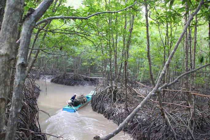 Trải nghiệm thú vị ở rừng ngập mặn lớn nhất Việt Nam - Ảnh 6.