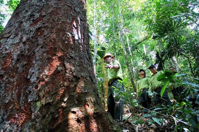 Việt Nam thí điểm bán tín chỉ carbon rừng - Ảnh 1.