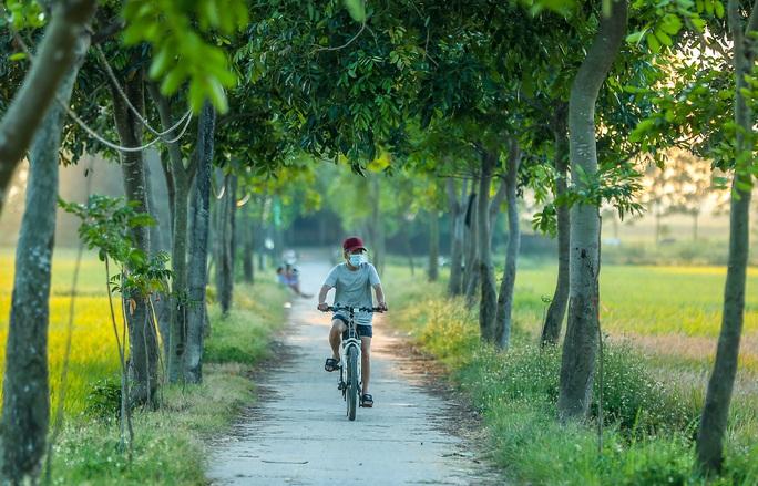 Ngỡ ngàng vẻ đẹp bình dị mùa lúa chín vùng ngoại ô Hà Nội - Ảnh 9.