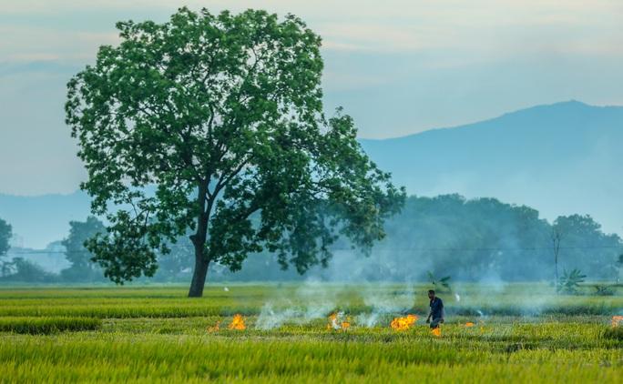 Ngỡ ngàng vẻ đẹp bình dị mùa lúa chín vùng ngoại ô Hà Nội - Ảnh 6.