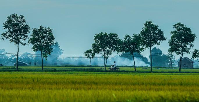 Ngỡ ngàng vẻ đẹp bình dị mùa lúa chín vùng ngoại ô Hà Nội - Ảnh 3.