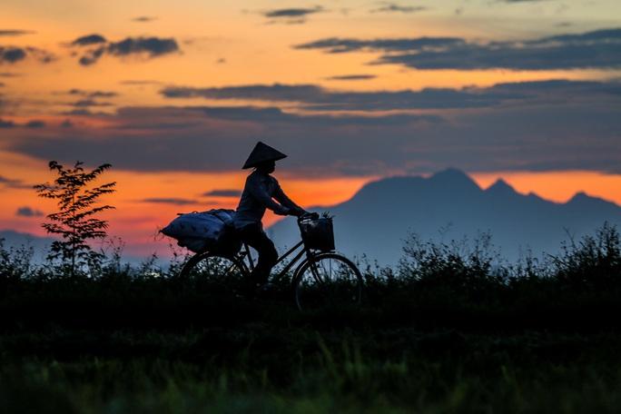 Ngỡ ngàng vẻ đẹp bình dị mùa lúa chín vùng ngoại ô Hà Nội - Ảnh 12.