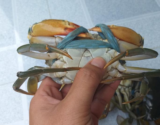Những món ăn trứ danh từ cua biển ngon nhất miền Tây - Ảnh 6.