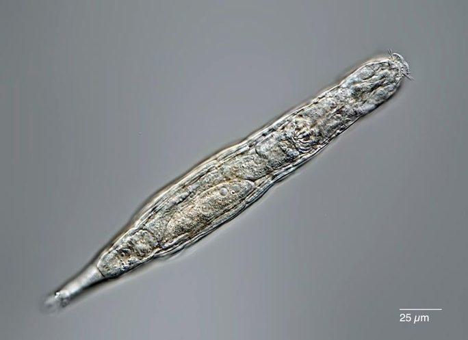 Hãi hùng sinh vật bị đóng băng 24.000 năm bất ngờ sống dậy - Ảnh 1.