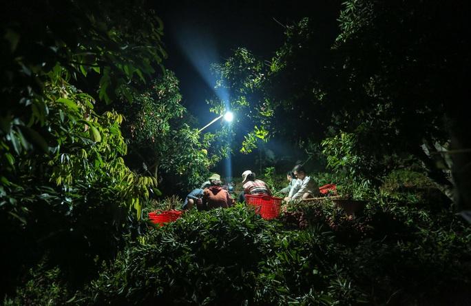 CLIP: Người dân Lục Ngạn thắp đèn thâu đêm thu hoạch vải - Ảnh 9.