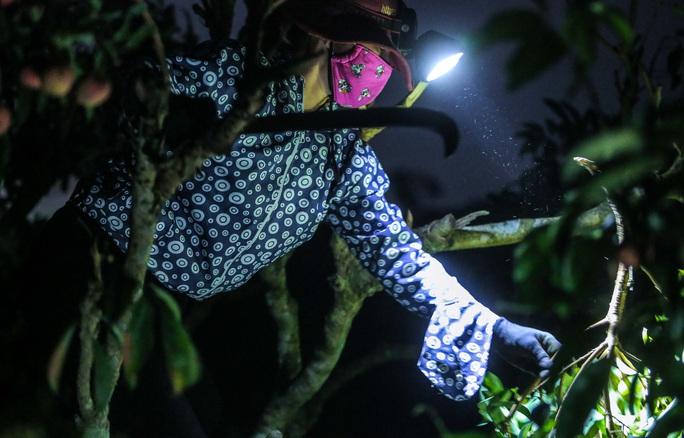 CLIP: Người dân Lục Ngạn thắp đèn thâu đêm thu hoạch vải - Ảnh 3.