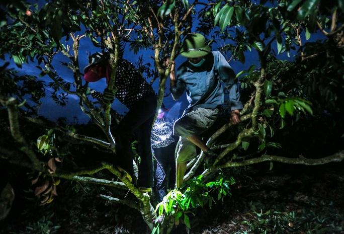 CLIP: Người dân Lục Ngạn thắp đèn thâu đêm thu hoạch vải - Ảnh 6.