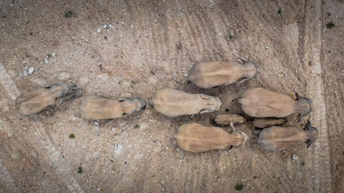 Trung Quốc: Đàn voi bất trị gây sốt vì ngủ trưa quá đáng yêu - Ảnh 6.