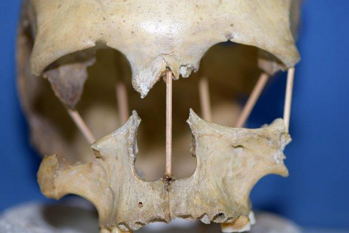 Cô gái 35.000 tuổi mang dòng máu 2 loài tiết lộ 2 lần biến đổi của con người - Ảnh 1.