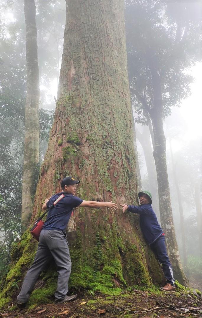 Thăm rừng đặc sản ở xứ Thanh - Ảnh 1.
